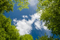 Green foliage and sky Royalty Free Stock Photo