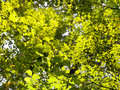 Green foliage in sunlight sunny forest Stock Photo