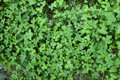Green foliage view from top Royalty Free Stock Image