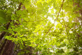 Green foliage in the woods Royalty Free Stock Photo