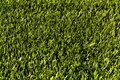 Green football field grass.Texture Royalty Free Stock Photo