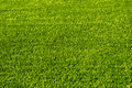 Green football field grass.Texture Royalty Free Stock Photo