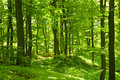 Green Forest Royalty Free Stock Photo