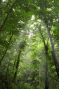 Green forest Royalty Free Stock Photography