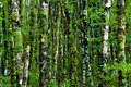 Green forest background Royalty Free Stock Photos