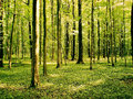 Green forest beautiful wild with clean air in it ideal for meditation and relaxation Stock Photography
