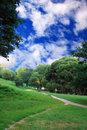 Green forest with blue sky and clouds summer day Stock Photo