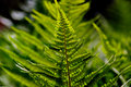 Green Forest Fern Royalty Free Stock Images