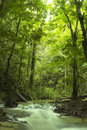 Green forest and stream Stock Images