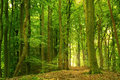 Green forest in summer Royalty Free Stock Photography