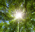 Green forest. Sun light through treetops. Stock Image