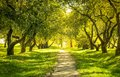 Green forest sunlight in the spring time Royalty Free Stock Image