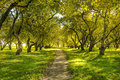 Green forest sunlight in the spring time Royalty Free Stock Photos