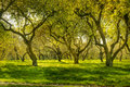 Green forest sunlight in the spring time Stock Images