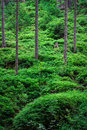Green forest with thick bushes Stock Images