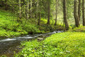 Green forest vegetation with creek flowing Royalty Free Stock Photo