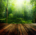 Green forest wooden floor perspective and with ray of light Stock Photos
