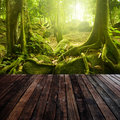 Green forest wooden platform and with ray of light Royalty Free Stock Images