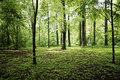 Green forrest in summer europe Royalty Free Stock Photo