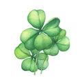 Green four leaf clover.