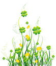 Green four-leaves and yellow wild flower Stock Photos