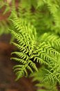 Green fresh fern intensive in the sun Royalty Free Stock Image