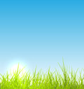 Green fresh grass and blue sky summer background