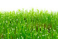 Green fresh grass with water drops Stock Photo
