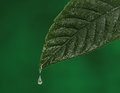 Green fresh leaf with a water drop falling natural background Stock Photography