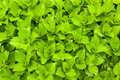 Green fresh leaves round background Stock Photos