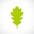 Green fresh oak leaf icon