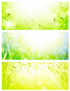 Green fresh sunny banners Royalty Free Stock Images