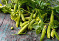 Green freshly picked pea pods and stems Royalty Free Stock Photo