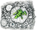 Green frog hunting a fly with orange paws and eyes little blue on hand drawn ink monochrome backround Stock Photo
