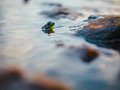 Green Frog With Its Head Sticking Up on Water Beside Rock in Selective Focus Photography