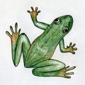Green frog with orange paws and eyes drawn with colored ink pens Royalty Free Stock Photography