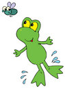 Green Frog (vector clip-art) Royalty Free Stock Image