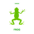Green frog on a white background Royalty Free Stock Photo