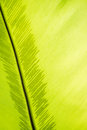 Green frond with spore lines close up image fern blade many Royalty Free Stock Photo