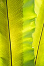 Green frond with spore lines close up image fern blade many Royalty Free Stock Images