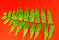 Green fronds Royalty Free Stock Image