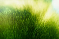 Green fur texture Royalty Free Stock Photo