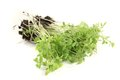 Green garden cress on a light background Royalty Free Stock Images