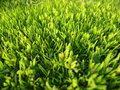 Green garden grass lawn beautiful well groomed the in the summer sun Royalty Free Stock Photography