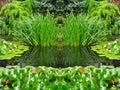 Green Garden Nature