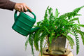Green gardening watering fern Royalty Free Stock Photos