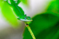 Green gecko on a branch in garden Royalty Free Stock Images