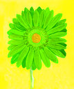 Green gerbera on yellow, watercolor Royalty Free Stock Photo
