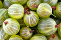 Green gooseberry background Royalty Free Stock Photography