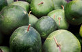 Green Gourds Royalty Free Stock Photo
